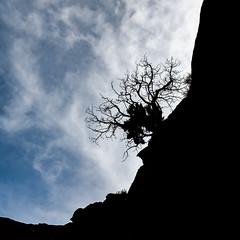 On Edge (SammCox) Tags: capitolreef grandwash silhouette tree utah