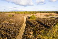 Balloërveld, 2018 (Gojero) Tags: heide nederland heath moor balloërveld landscape drenthe