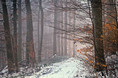 Winter forest (Rita Eberle-Wessner) Tags: winter snow schnee forest wald woods waldweg forestpath trees bäume tree baum laub leaves efeu ivy odenwald