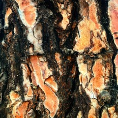 20:365:2019 (hermitsmoores) Tags: 3652019 bark tree patterns texture january 2019