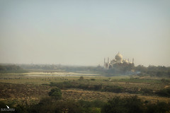 Taj Mahal Landscape (pbmultimedia5) Tags: taj mahal building architecture landscape agra india mist cloudy pbmultimedia city sky grass tree tower water cows river