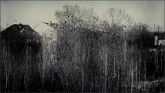 In Gelsenkirchen (Eva Haertel) Tags: eva haertel city stadt cityscape stadtlandschaft gelsenkirchen deutschland germany haus house trees bäume kahl bare winter season monochrom minimalism minimalismus himmel sky trüb cloudy muddy