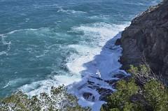 Over the Rocks and Waves (alexeymatyna) Tags: costabrava catalunya bird waves sea rocks spain