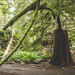 Cathedral Grove [2]