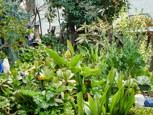 2019-03-25 - Nature Photography - Flowers/Plants - Japanese Garden