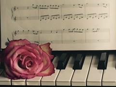 88/365 (MairéadNiRodaigh) Tags: piano music keyboard rose