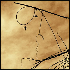 play of branches (luci_smid) Tags: branches trees nature shapes pattern sepia monochrome