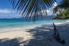 Anse Soleil / Пляж Анс Солей (dmilokt) Tags: природа nature пейзаж landscape море sea пляж beach песок sand пальма palm dmilokt nikon d850