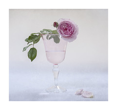 Love is in the air (loraine.french57) Tags: glass rose petals pink drink leaves rosajamesgalway love textured