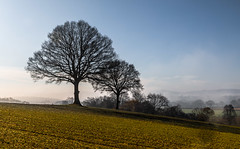 2 Trees on a Hill (THE NUTTY PHOTOGRAPHER) Tags: trees mistymorning mist westsussex sussex