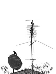 Birds' Parking Lot-2 (zeevveez) Tags: zeevveez zeevbarkan זאבברקן canon antenna bird bw