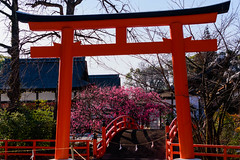 DSC_0150 (ponkiti3) Tags: 下鴨神社 京都 梅 植物 風景