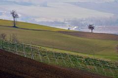 Colline marchigiane (luporosso) Tags: natura nature naturaleza naturalmente nikon nikonitalia colline hills country countryside scorcio scorci alberi trees campi campagna