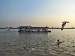 0105 (Paul_PA) Tags: yangon rangoon myanmar burma ship bird birds river water ferry flying