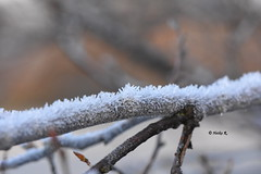 If we wait, until we're ready, we'll be waiting for the rest of our life. (heikecita) Tags: winter ice eis ast baum tree natur nature macro makro branch