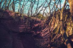 KRIS8019 (Chris.Heart) Tags: erdő buda budapest túra természet forest nature hiking