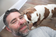 Day 3731 - Day 79 - Beard Approval (rhome_music) Tags: cavalier kingcharles spaniel puppy dog mansbestfriend cavalierkingcharles 365days 365days2019 365more daysin2019 photosin2019 365alumni year11 365daysyear11 dailyphoto photojournal dayinthelife 2019inphotos apicaday 2019yip photography canon canonphotography eos 7d