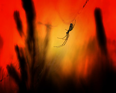 The fight...  ! (♥ ⊱ ╮Juergen╭~Secret Melody~) Tags: wildlife spider untouched io neh e