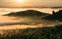 Golden morning in Saxon Switzerland (Uwe Kögler) Tags: deutschland saxony sachsen sächsischeschweiz sunrise sonnenaufgang germany elbsandsteingebirge elbe felsen fog gohrisch
