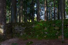 Life, exuberant (lebre.jaime) Tags: portugal beira covilhã forestpark tree moss light digital nikon d600 afsnikkor5018g affinity affinityphoto