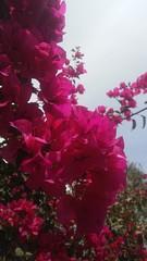 WhatsApp Image 2019-04-09 at 11.13.32 PM (1) (orionqazar_149) Tags: naturaleza parque fotgrafia tumblr noche dia bonito verde cielo azul arboles luz flores pasto arte