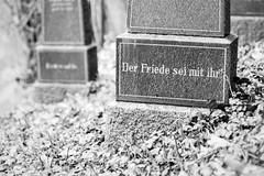 RIP (chipsmitmayo) Tags: nikon f100 nikkor 85mm f14 agfa apx 100 film analog schwarzweiss blackandwhite sw monochrome bw kleinbild labor sauerland schmallenberg hsk westfalen friedhof cemetery grabstein graveyard grave stone friede piece rest death tod