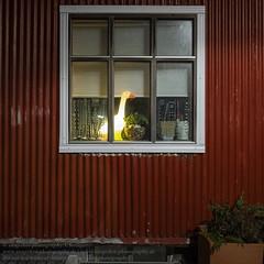 Die Fenster von Reykjavik (Agentur snapshot-photography) Tags: island iceland isländisch isl reykjavik hauptstadt reykjavíkurborg fenster wohnen lebenswelten symbol symole symbolfoto alltag window windows wohnwelten gesellschaft architektur architecture lebensalltag einblick einblicke schnappschuss 012300 momentaufnahme bevölkerung 012200 symbolbild symbolfotos beleuchtung erleuchtet erleuchtete licht bauwerke gebäude building haus häuser wohnhaus wohngebäude hausfassade fassade kunst 01000000 art