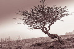Little tree in fog - re-imagined (alan.thecannon) Tags: shadow tree landscape cloudy misty mist foggy fog