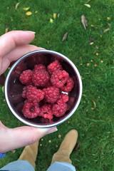 still! (domit) Tags: domit garden house rental wemmel belgium raspberry harvest