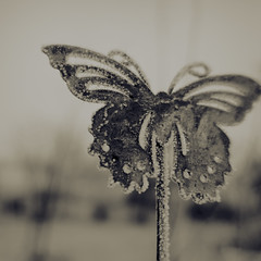 day 42 (Randomographer) Tags: project365 butterfly metal ornament ornamental frozen frost cold winter below freezing bitter icy icecovered icebound frosty frosted gelid solid colorado project 365 crystal depth field outdoor bokeh blossom pattern texture monotone grey mood