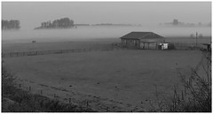 lonely horse (Andy Stones) Tags: farm horse fields mist weather weatherwatch bw countryside trees nature naturephotography naturelovers natureseekers outdoors outside photography photoof image imageof imagecapture