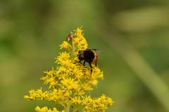 DSC_6693 (Hachimaki123) Tags: 所沢航空記念公園 tokorozawaaviationmemorialpark 日本 japan 所沢市 埼玉県 所沢 tokorozawa saitama animal insect insecto 虫 動物