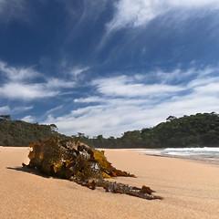 Stranded (OzzRod) Tags: gopro hero7 coast shoreline beach kelp stranded sky cirrus square barraggabay nswfarsouthcoast