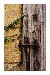 _IMG8088 (angel.doychinov) Tags: door ivy smcpm50mmf14