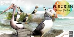  T L C  @ Flourish sales event (- TRUE & LAUTLOS CREATIONS -) Tags: tlc home collection tlchomecollection flourish sales event sl second life secondlife studio animal puffin pelican mesh │t│l│c│