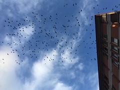 Migration (mihrilkyaz) Tags: cityphotography streetphotography city turkey sky communal kuş birds göç migration blue infinity nature natural