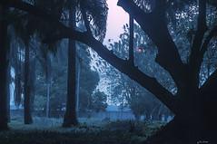 ORE 6:50 IL SOLE  ENTRA NELLA FORESTA    ----    6:50 am THE SUN ENTERS INSIDE THE FOREST (Ezio Donati is ) Tags: natura narure foresta forest sole sun alberi trees aurora sunrise panorama landscape cielo sky rosa pink westafrica costadavorio bingerville