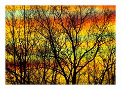 Winter Trees, Winter Sky (George McHenry Photography) Tags: silhouettes trees winter wintertrees sunrise daybreak
