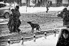 joy of the first snow (Zlatko Vickovic) Tags: streetstreetphoto streetphotography streetphotographybw streetbw streetphotobw blackandwhite monochrome zlatkovickovic zlatkovickovicphotography novisad serbia vojvodina srbija
