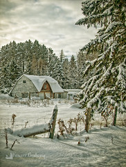 Snowed In (Knarr Gallery) Tags: snow winter muskoka huntsville tree farm knarrgallery knarrphotography knarrgallerycom darylknarr ice nikon18200mmvriiafs d300 fence barn rural field