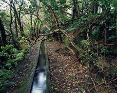 Levada IV (JaZ99wro) Tags: exif4film water green fern tree provia100f e6 forest tetenal3bathkit f0366 plustekopticfilm120 pentax67ii madeira levada film analog