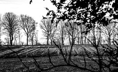 Gate to nowhere (Fearghàl Nessbank) Tags: nikon d700 blackwhite monochrome landscape art gate trees