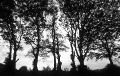 Somewhere in Devonshire (rob kraay) Tags: trees backlight blackandwhite robkraay silhouette clouds branches mysterious leaves bw tree sky landscape