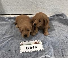 Annie Girls pic 4 3-9