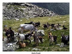 Bergwelten (fotokarin57) Tags: sarntal östereich oderding alpen autofokus berge