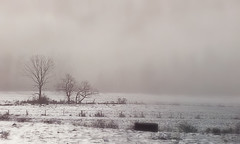 Hazen Road Foggy Morning 2-21-19 1-Final 2 Cropped (Javcon117*) Tags: foggy morning fog hazen road cumberland maryland md allegany county western javcon117 frostphotos bw blackwhite trees field pasture hay weeds snow ice rural farm bale