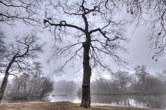 Silhouette (ArtGordon1) Tags: hollowpond eppingforest leytonstone london england uk winter february 2019 davegordon davidgordon daveartgordon davidagordon daveagordon artgordon1 misty mistymorning