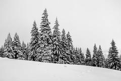 Let it snow (Piotr_PopUp) Tags: praded karlovastudanka barborka jeseniky czechrepublic czechia moravy česko winter snow trees forest landscape nature blackandwhite blackwhite bw bnw monochrome mono minimal less minimalistic malamoravka