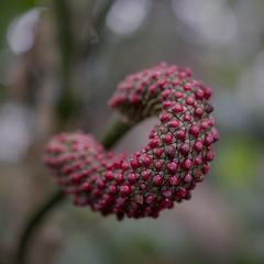 US Botanic Garden closeup (jtgfoto) Tags: approved usbotanicgarden washingtondc washington sonyimages sonyalpha jungleroom