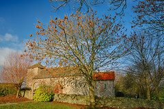 St Botolphs church , south elevation (Through Bri`s Lens) Tags: sussexdowns annington stbotolphschurch autumn colour holy holyplace worship brianspicer canon5dmk3 canon1635f4
